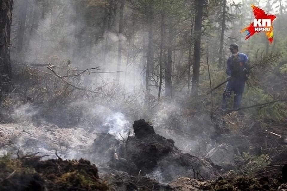 Статистику по лесным пожарам в Башкирии озвучил Минлесхоз