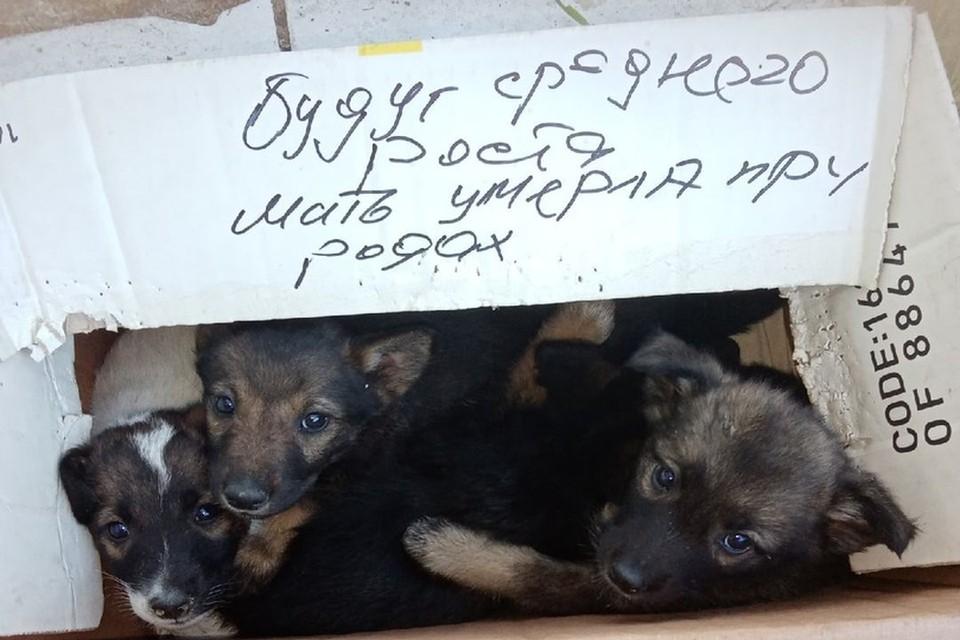 Новосибирец нашел коробку с щенками. Фото: Евгений Кандыба