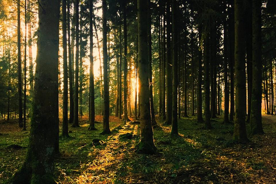 Во многих районах Беларуси в лес нельзя ходить даже за ягодами. Фото: Pexels