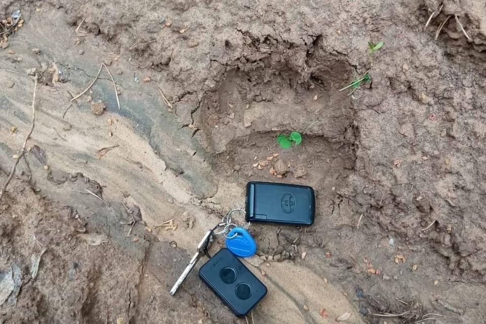 Пришел посмотреть сняли ли локдаун: в Бурятии нашли следы медведя недалеко от городского музея. Фото: Бурприроднадзор, @burprirodnadzor