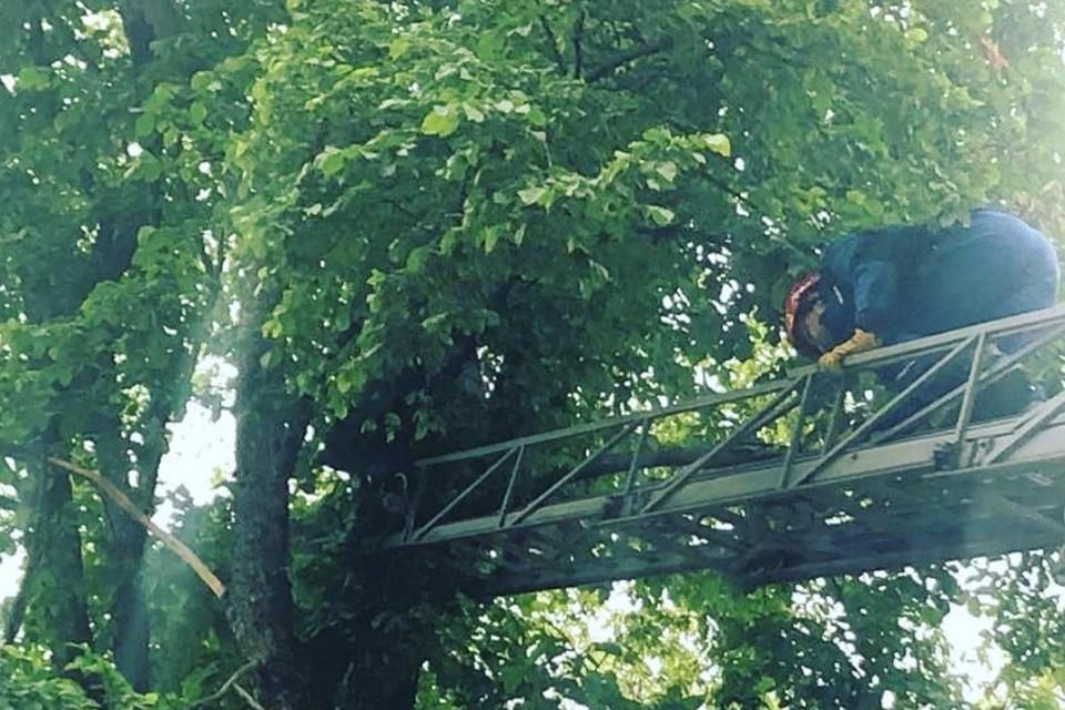 Для того чтобы достать опасный объект, пришлось использовать пожарную лестницу Фото: instagram.com/pss_izh/