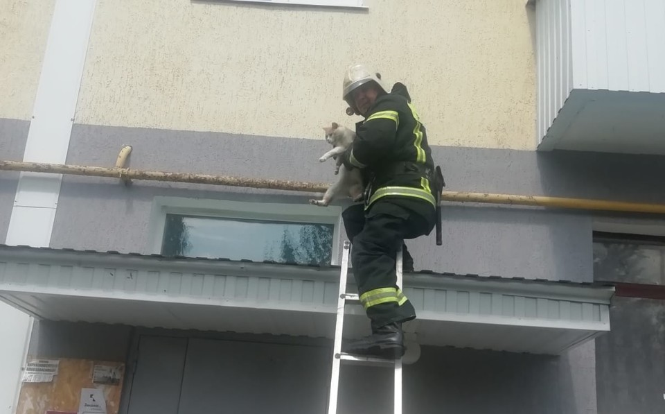 Кот застрял между первым и вторым этажами.