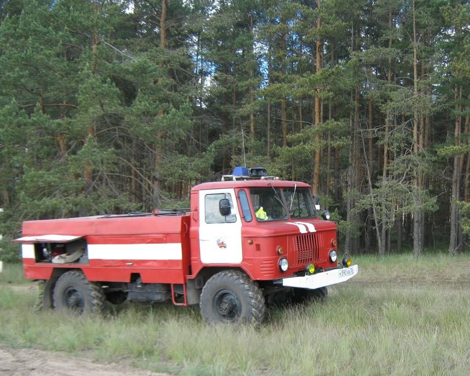 Фото с сайта управления лесхоза Воронежской области