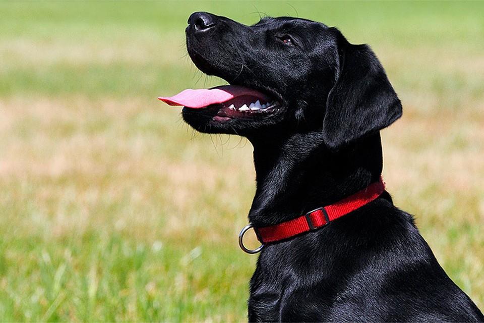 Власти США вводят временный запрет на ввоз собак из 113 стран мира