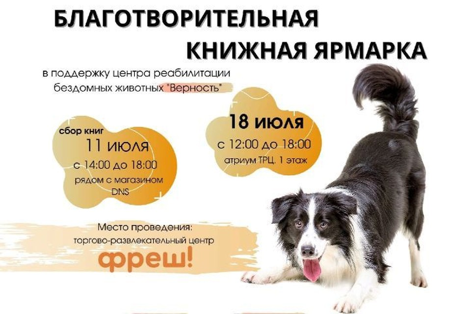 """В Ярославле пройдет ярмарка в поддержку бездомных животных. Фото: центр реабилитации животных """"Верность"""""""