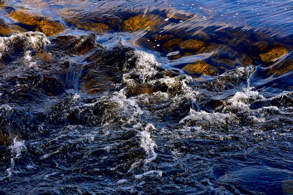 Специалисты взяли пробы рыбы для проведения микробиологических, химико-токсикологических исследований.