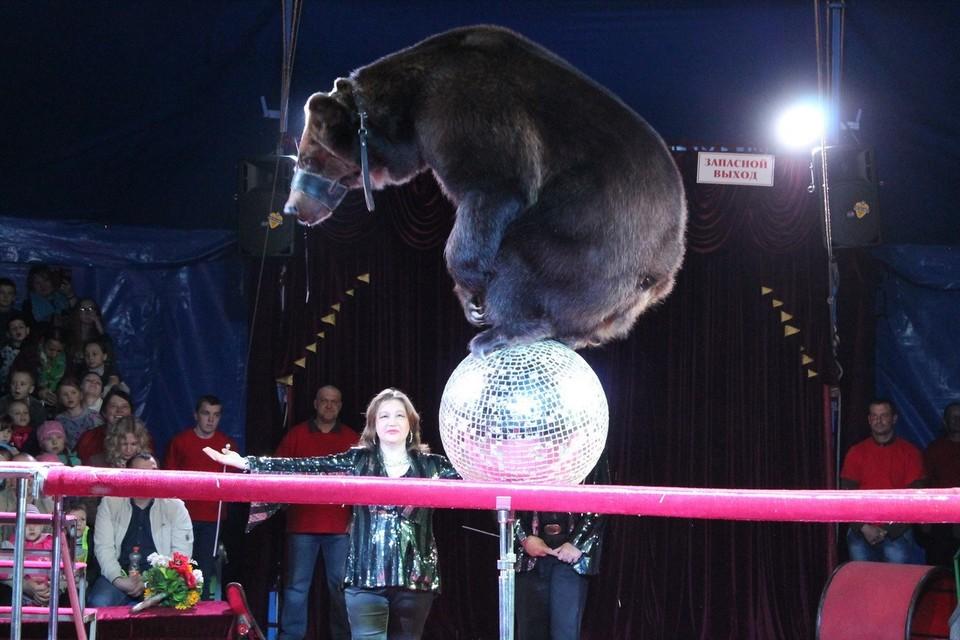 Фото: официальный сайт цирка шапито «Арлекин»
