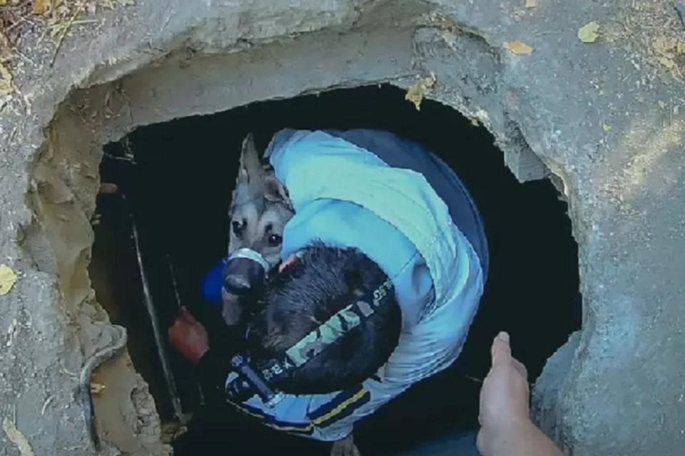 Неравнодушие людей спасло животное от неминуемой гибели. Фото: архив приюта «4 ЛАПКИ»