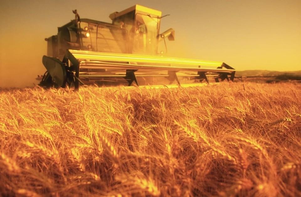 В регионе собрали первый миллион тонн зерна нового урожая