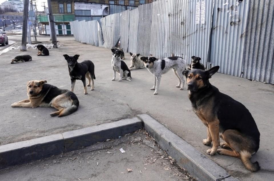 От укусов диких зверей пострадало 51 человек, от укусов собаками 889 человек.