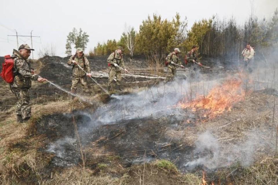 В тушении лесных пожаров были задействованы 1499 человек и 430 единиц техники