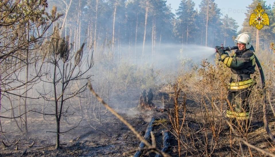 В лесах Тверской области сохранится высокая пожарная опасность Фото: ГУ МЧС России по Тверской области