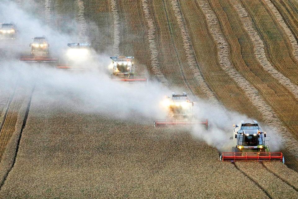 Комбайны убирают урожай пшеницы. Ставропольский край, Россия.