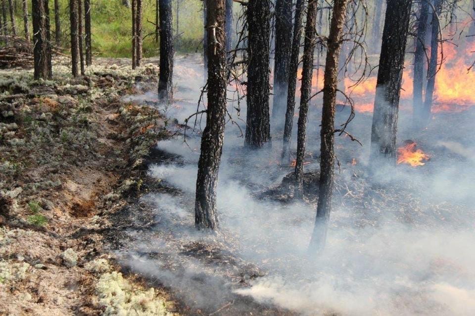 Пожар в Усть-Цилемском районе - самый крупный в Коми. Фото Коми регионального лесопожарного центра