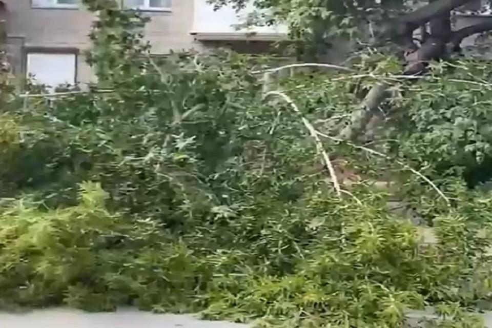 В Новосибирске дерево упало на припаркованные машины. Фото: стоп-кадр.