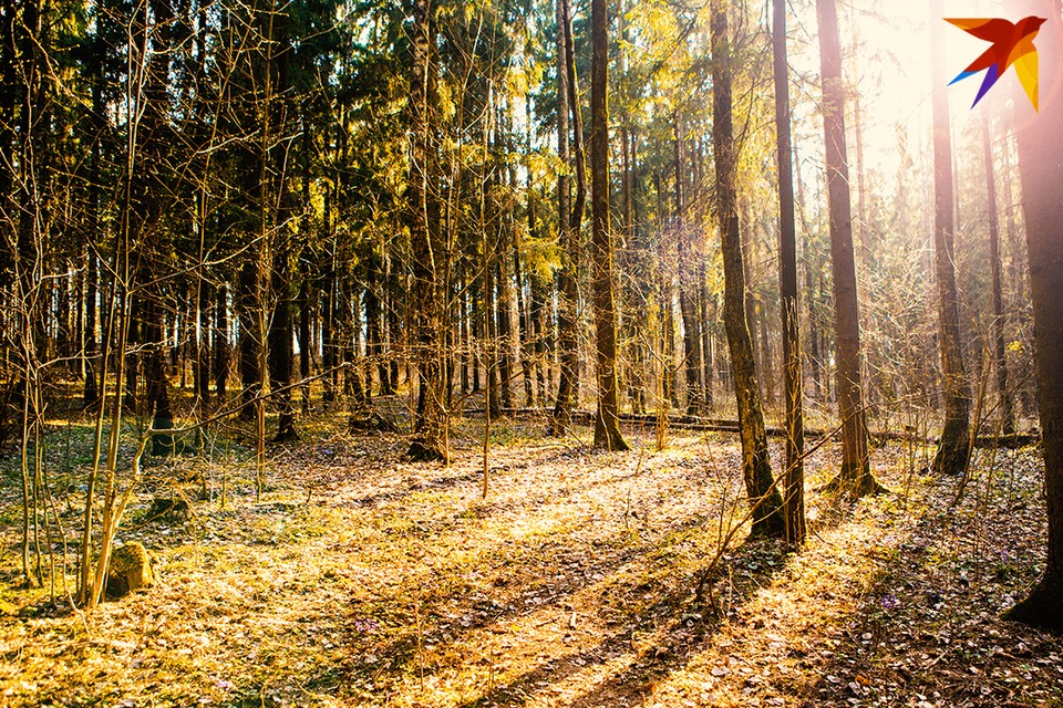 Пожилой мужчина заблудился и сутки бродил по лесу. Фото: Юлия Хвощ
