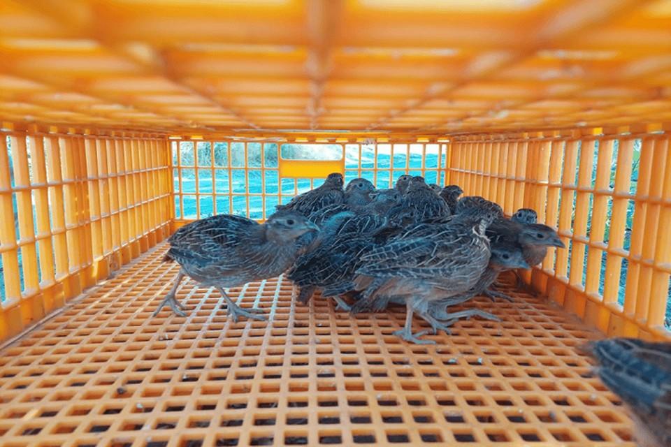 Новых поселенцев привезли в специальных клетках-переносках. Фото: пресс-служба Минприроды РО