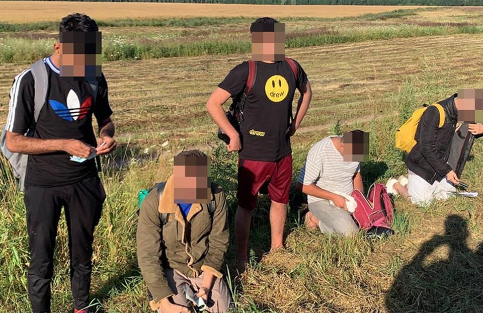 За сутки в Польше на границе с Беларусью поймали 53 мигранта, в Литве – 70. Фото: pasienis.lt.