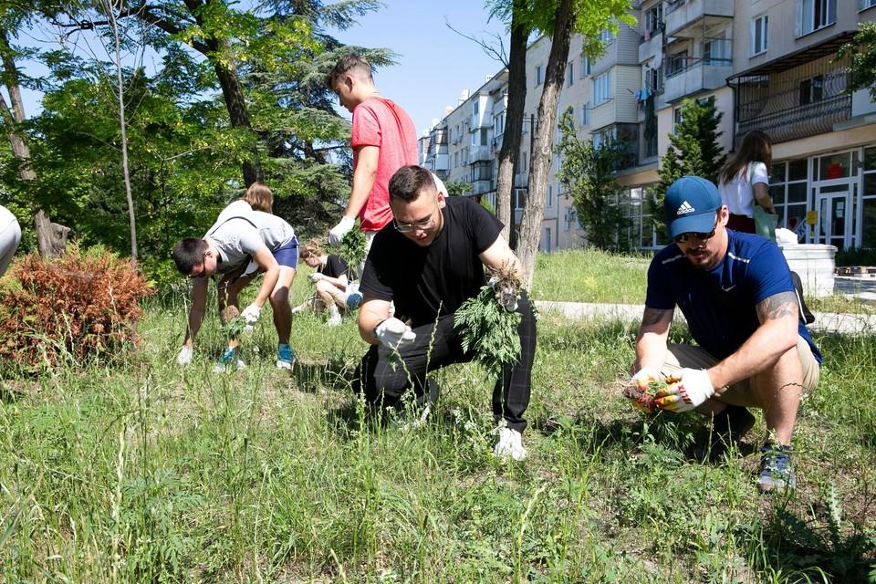 Субботник по прополке амброзии в Гагаринском районе