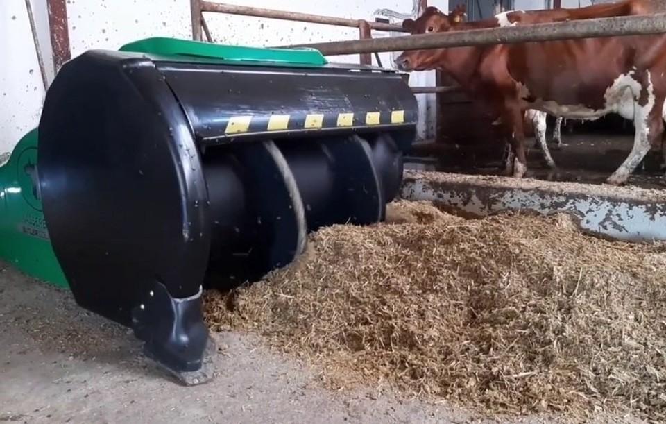 На предприятии содержится более 1 180 голов крупного рогатого скота. Фото: Андрей Рюмшин / Facebook