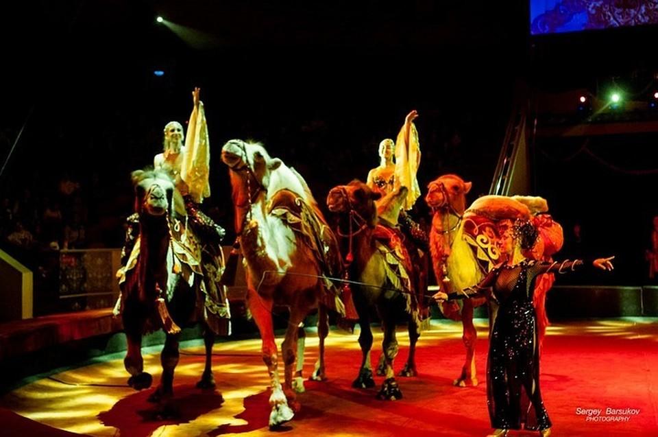 Марица Запашная с номером «Гротеск» на гастролях в Омске. Фото пресс-службы Росгосцирка