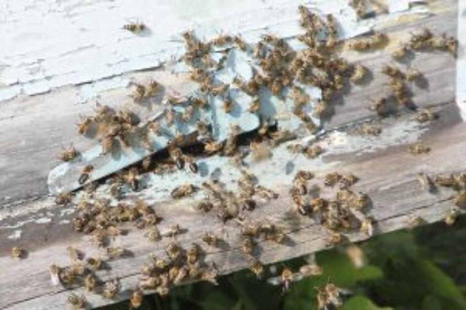 Разобрал по бревнышку: в Ярославский области у пенсионера украли зимовник для пчел