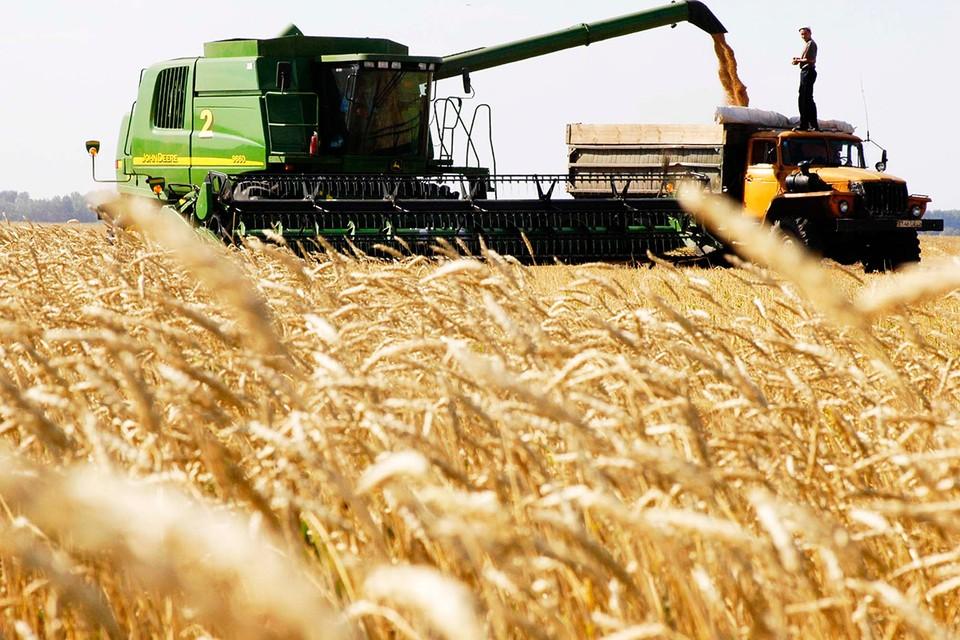 В России вновь хороший урожай зерна.