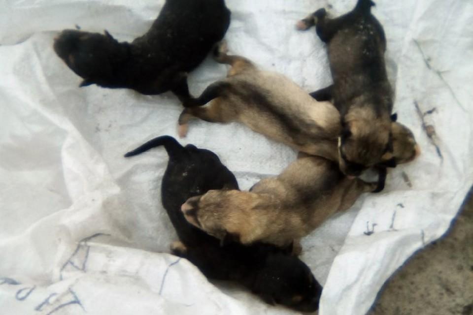 """Фото: паблик """"Подслушано в Салехарде"""". Выброшенные щенки."""