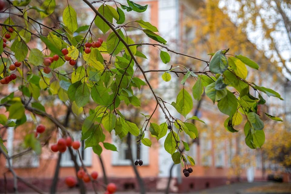 Погода в Красноярске на сентябрь 2021: тепло до +23 градусов, заморозки до -3 и отсутствие осадков