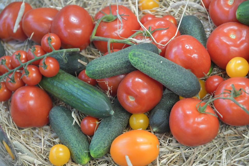 Огурцы и помидоры в Волгоградской области стоят больше 50 рублей