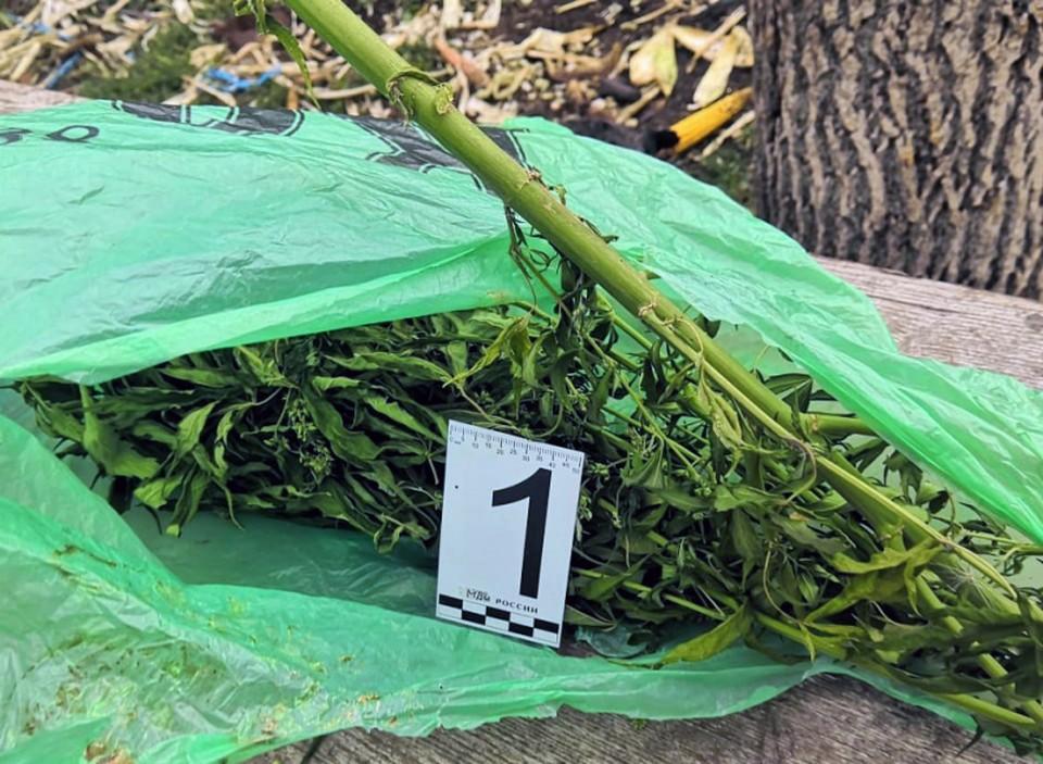 Орловец попал под статью из-за хранения конопли. Фото: пресс-служба УМВД России по Орловской области.