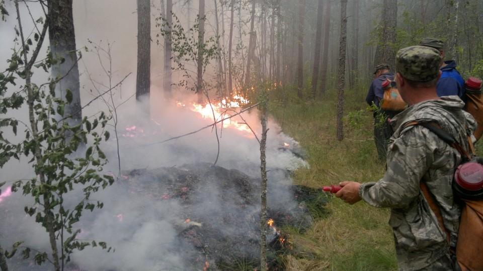 Пожар под Вольском потушен