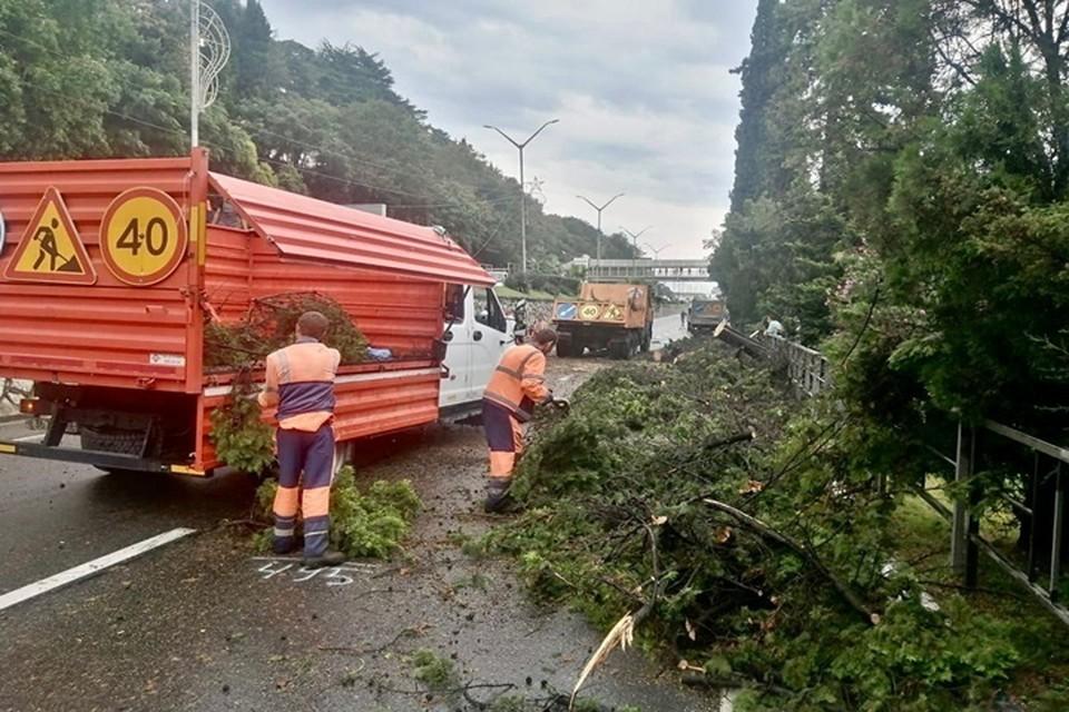 Дорожники распилили и убрали дерево с проезжей части. Фото: УПРДОР