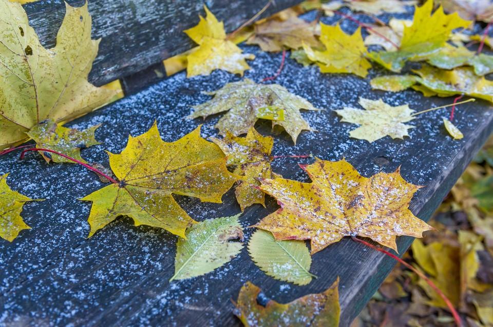 Первые заморозки ударят в Ленобласти 6 сентября