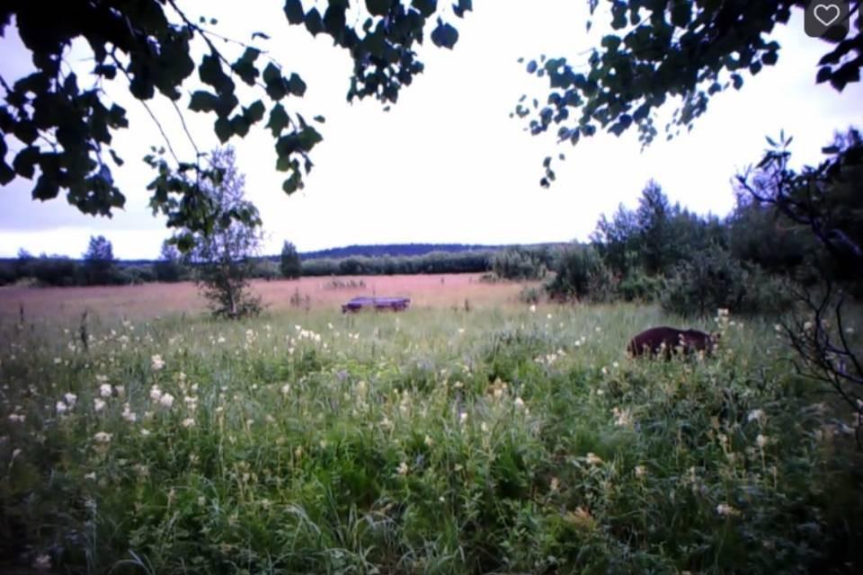 Мишка гулял по цветочному полю заповедника. Фото: скриншот видео