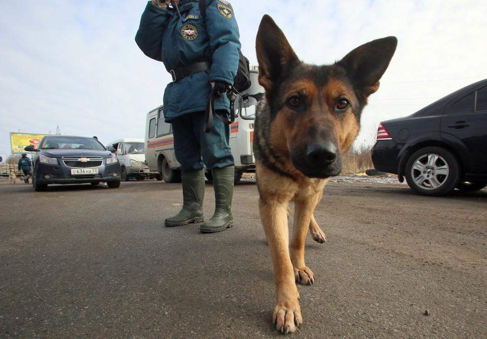 Снаряд также ищет специально обученная собака.