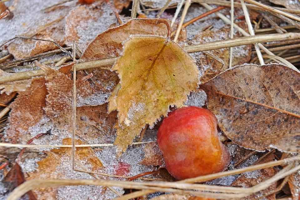 Такая температура может неблагоприятно повлиять на сельскохозяйственные культуры.