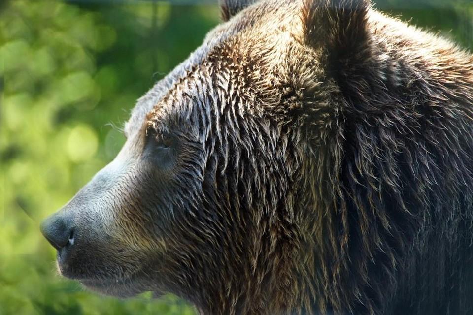 Медведица находилась в клетке на территории базы отдыха