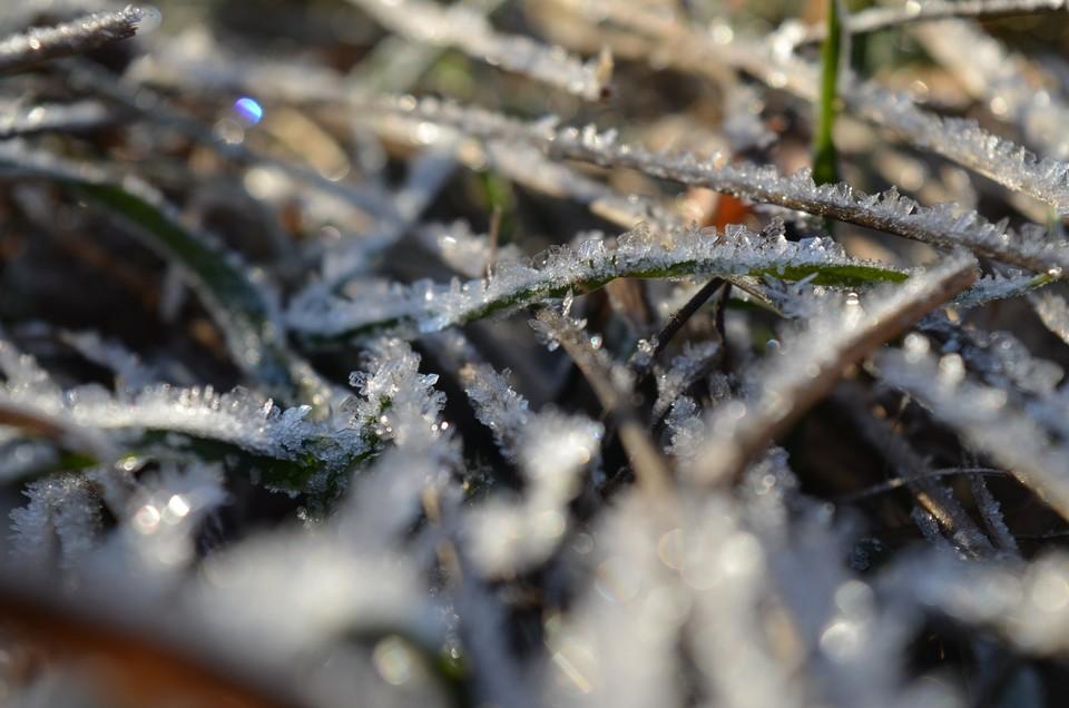 Первый осенний мороз ожидается в Орловской области