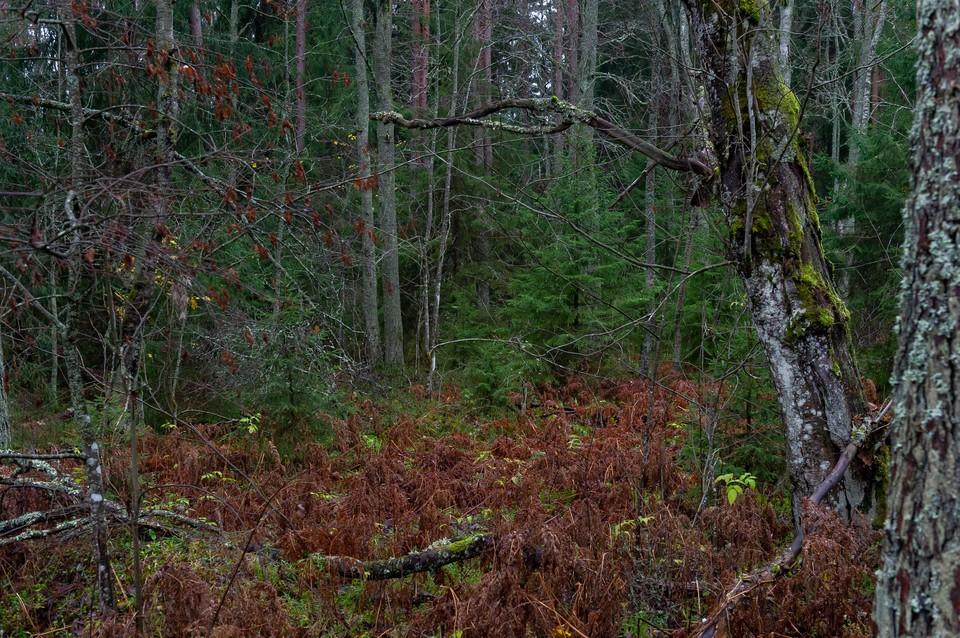 Труп без штанов и отпечатков пальцев нашли в лесу Ленобласти