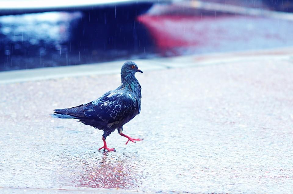 Днем в Ижевске возможны дожди Фото: pixabay.com