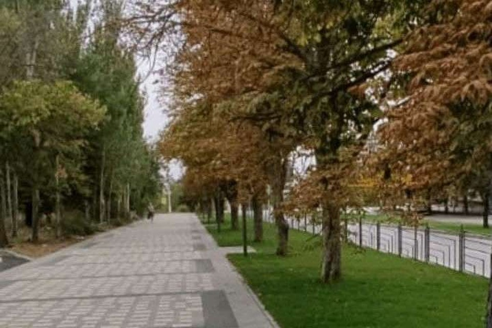 Вместо вырубленных деревьев на каштановой аллее высадят молодые. Фото: мэрия