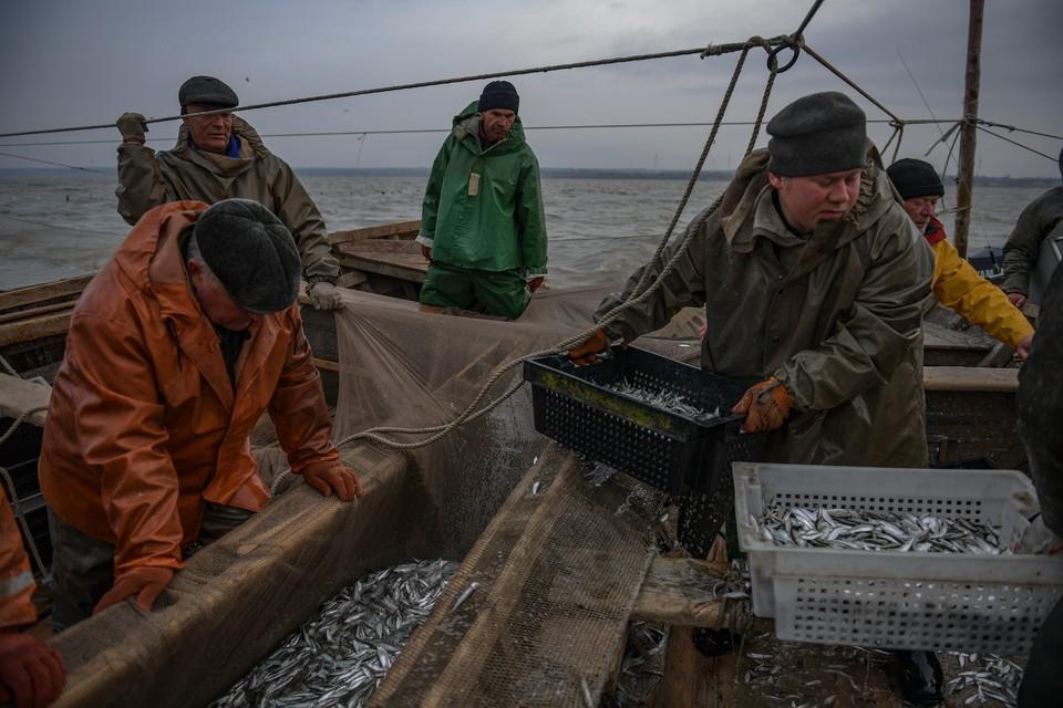 Замор рыбы чаще всего происходит во время сильной жары