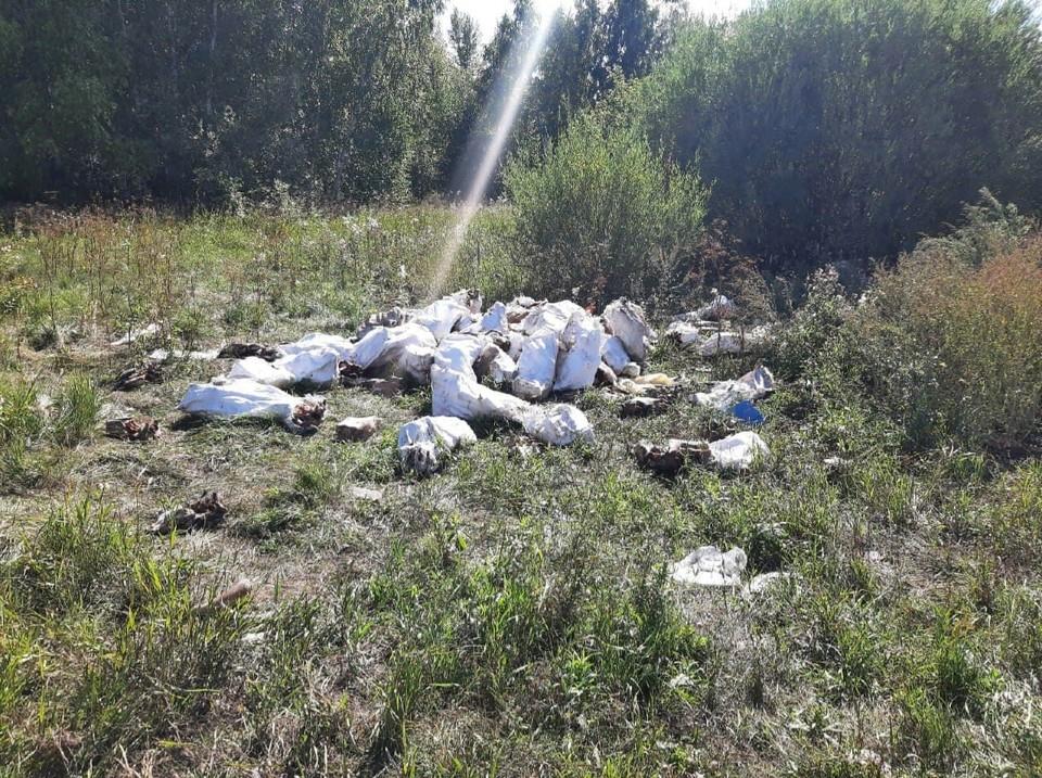 Неизвестные снова выбросили останки животных в городе. Фото: пресс-служба Россельхознадзора по Омской области