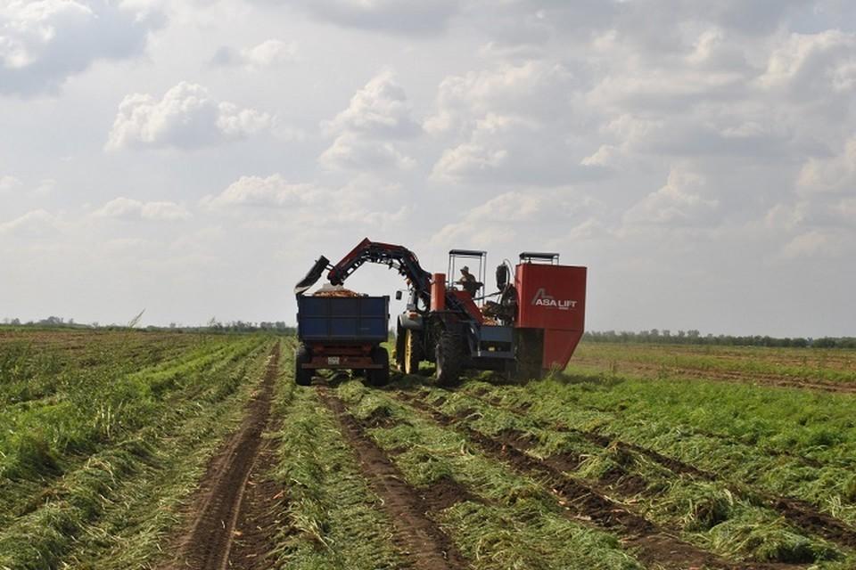 Кроме сева на Дону ведут уборку поздних зерновых, масличных и овощных культур. Фото: сайт правительства РО
