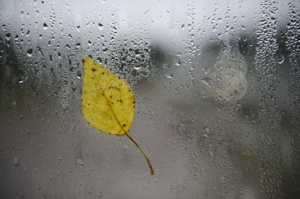 10 сентября синоптики ожидают дождь