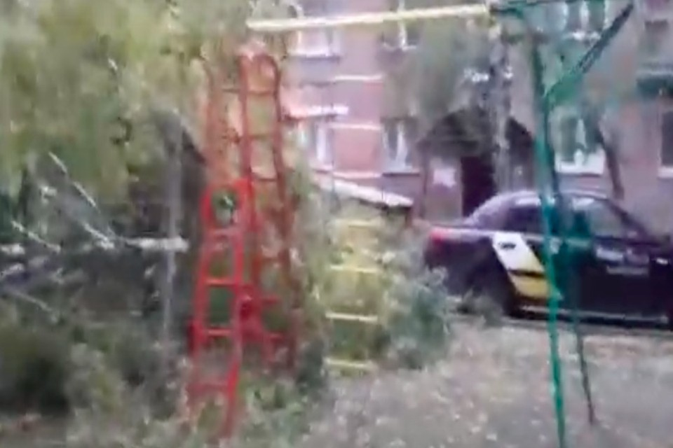 Дерево полностью повалилось на землю. Фото: стоп-кадр с видео «Вести Новосибирск»