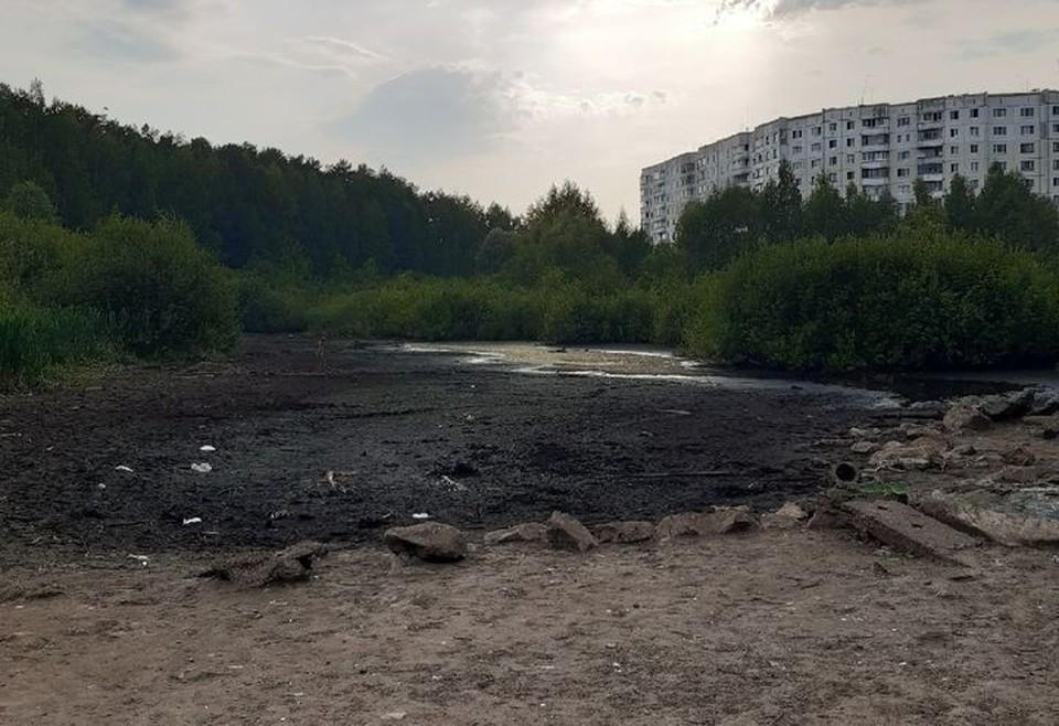 Утиное болото. Фото: соцсети