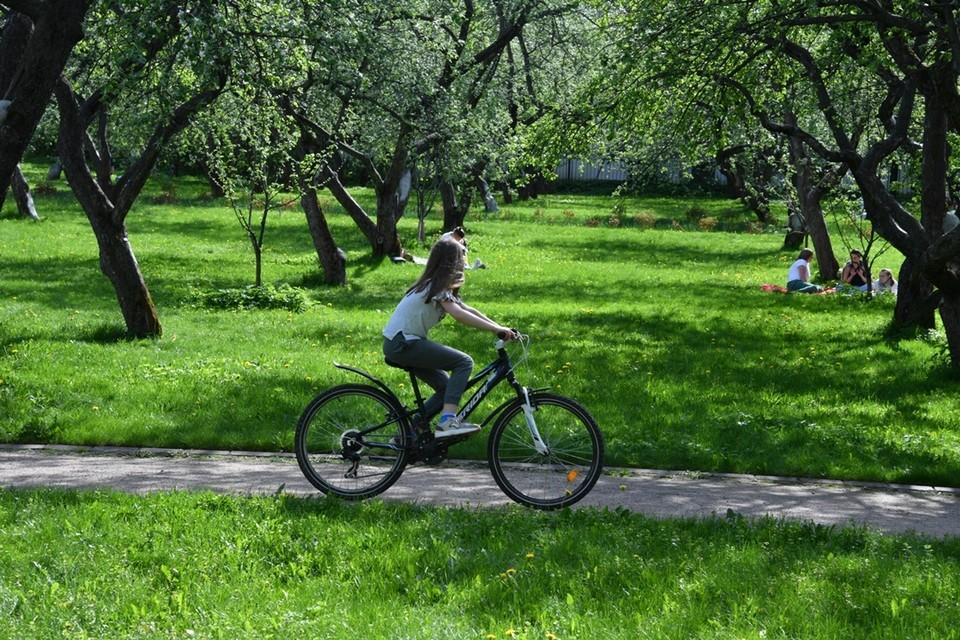 206 деревьев парка признаны аварийными.