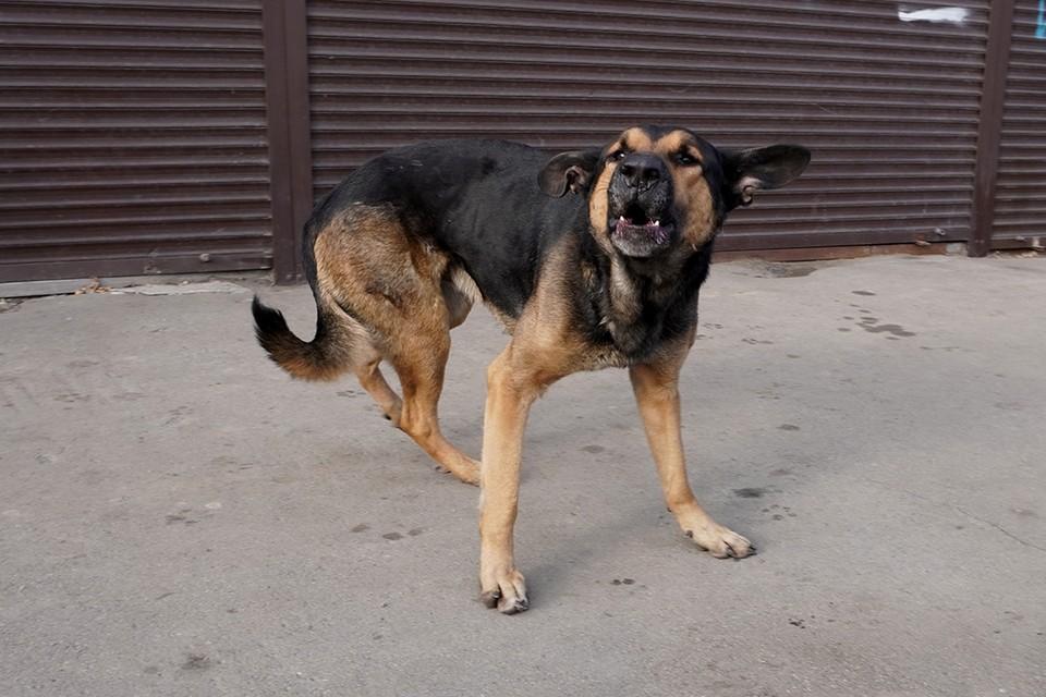 В центре Иркутска догхантеры травят собак таблетками от туберкулеза